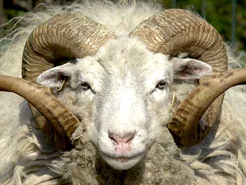 Classification des laines à matelas