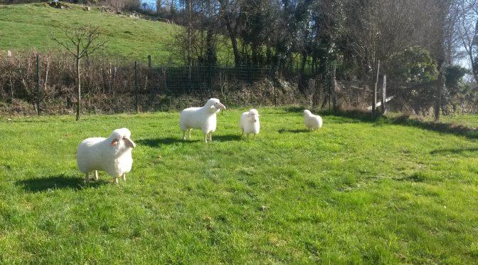 Moutons de décoration sculptés bois massif et peau lainée 2017