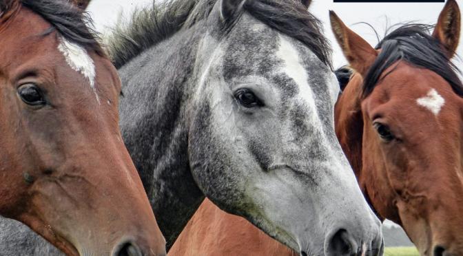 Fournitures : Crin de cheval