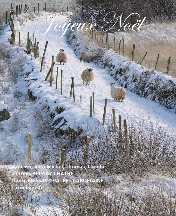 joyeux noel sheep