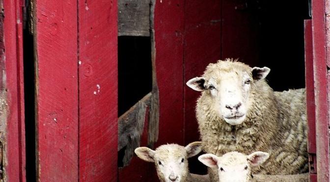Foire aux moutons de Molles