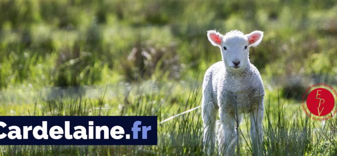 Egalisation d'un matelas 100% laine