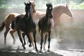 Oreiller ergonomique en crin de cheval